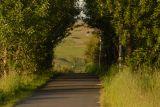 A walk path