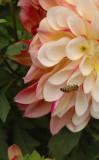 Insecta i Flora