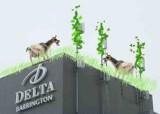 at-the-delta.jpg