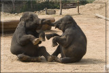 Love at its best. Elephant.jpg