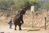 Basketball elephant.jpg