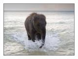 Elephant ocean.jpg