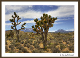 Joshua-Tree-desert.jpg