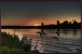 sunset ducks.jpg