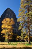 Valley Oak in Autumn.jpg