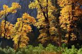 Autumn Glow in the Valley.jpg