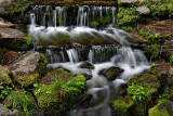 Fern Springs_2.jpg