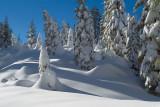 Shadows in the Snow.jpg