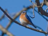 Bird photos, various excuses, Ann Arbor, 2007