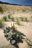 Sun, Sand, Cliffs:  Cape Cod