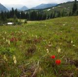 Meadows on Rainier, Washington