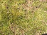 yellow moss.JPG