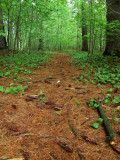 Forest Path.jpg