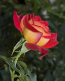 flowers__plants