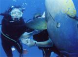 Australia - Great Barrier Reef , 11/19/06