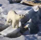 Arctic Norway (with Svalbard): Favorites