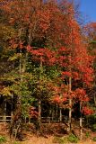Indiana - Fall in Happy Hollow State Park, West Lafayette, Fall Colors