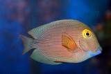 Show your kids the colors of the ocean - Aquarium