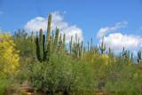 Cactus from the car, Sedona, AZ
