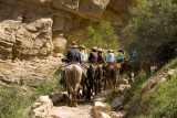 Mule ride, Bright Angel Trail, Grand Canyon National Park