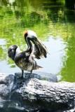 Cleaning frenzy, Stork, Galveston, TX