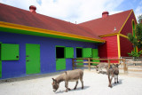 Donkeys by the barn, Indianapolis Zoo, IN