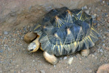 Shell Turtle, Indianapolis Zoo, IN
