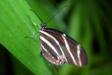 Butterfly: The sharpness of beauty