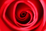 Mike's Red Rose