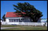 Port Stanley  (trees flagged from wind)