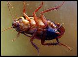 Cockroach inside window 2002