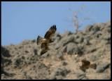 Booted Eagles - Salalah (2x exp.)