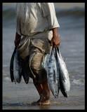 Tuna fisherman - Sur