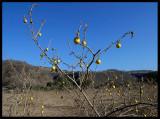 Dhofar mouintain Landscape