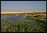 Muntasar oasis near South Arabian border