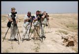 Sven, Bosse and Seppo spotting desert birds