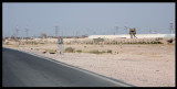 The well garded Iraqi border - american troops everywhere