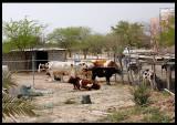 Abdali Farms - close to Iraqi border