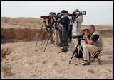 Looking for Wheatears in Sabah Al-Ahmad