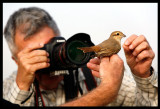 Bosse taking pictures of an Isabelline Shrike trapped in a mistnet