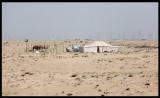 Tenting outside Kuwait City