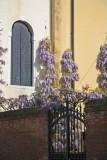 Venice 161