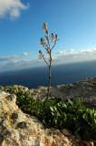 Coastal Flower