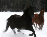 Two horses running in snow