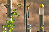 Finches at Larry's, LAGO at center top