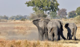 Three Elephant Behinds