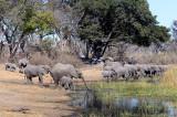 Elephant at the Lagoon