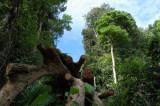 [04] Teluk Bahang - Muka Head Trail