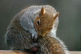 huh.. where did I bury my nuts ?