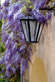 Lamp with Wisteria
